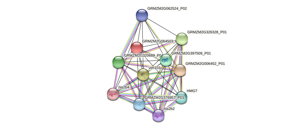GRMZM2G064503_P01 protein (Zea mays) - STRING interaction network