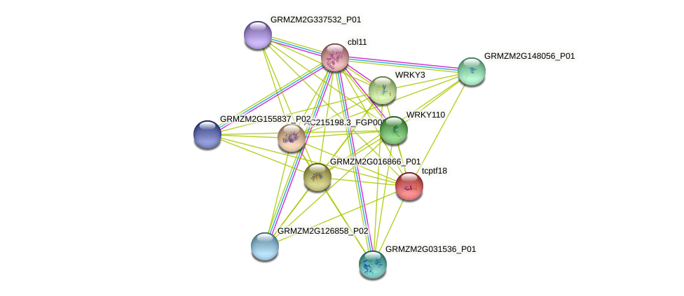 tcp18 protein (Zea mays) - STRING interaction network