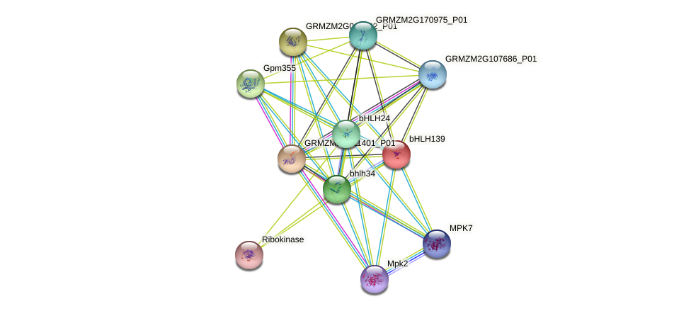 bHLH139 protein (Zea mays) - STRING interaction network