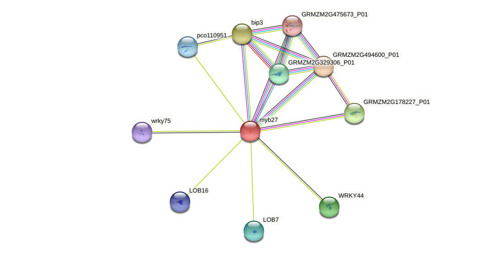 myb27 protein (Zea mays) - STRING interaction network