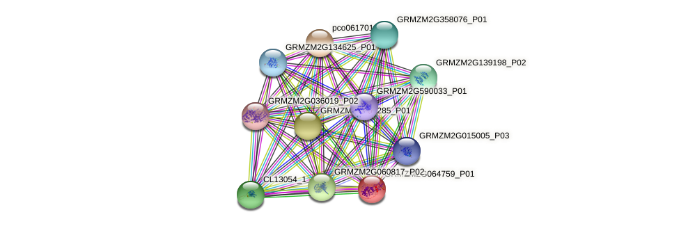 GRMZM2G064759_P01 protein (Zea mays) - STRING interaction network