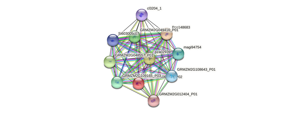 GRMZM2G064804_P02 protein (Zea mays) - STRING interaction network