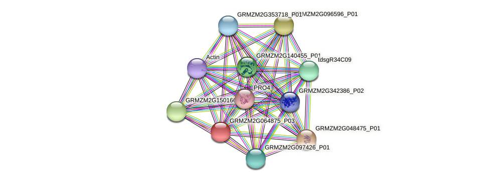GRMZM2G064875_P03 protein (Zea mays) - STRING interaction network