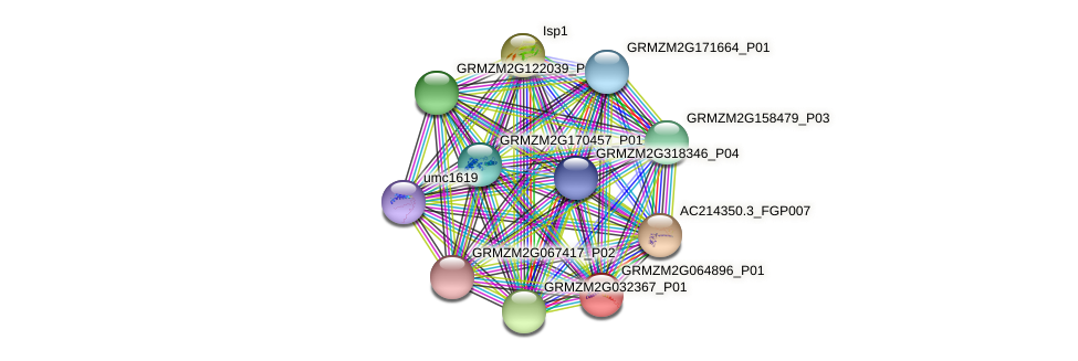 cl3071_3 protein (Zea mays) - STRING interaction network