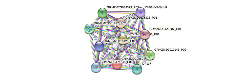 GRMZM2G065044_P01 protein (Zea mays) - STRING interaction network