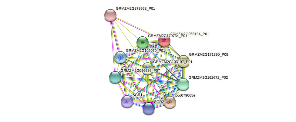 Zm.10767 protein (Zea mays) - STRING interaction network