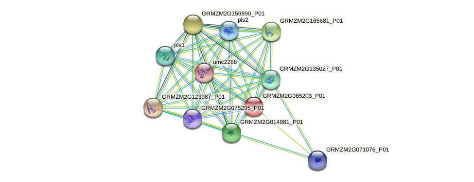 GRMZM2G065203_P01 protein (Zea mays) - STRING interaction network