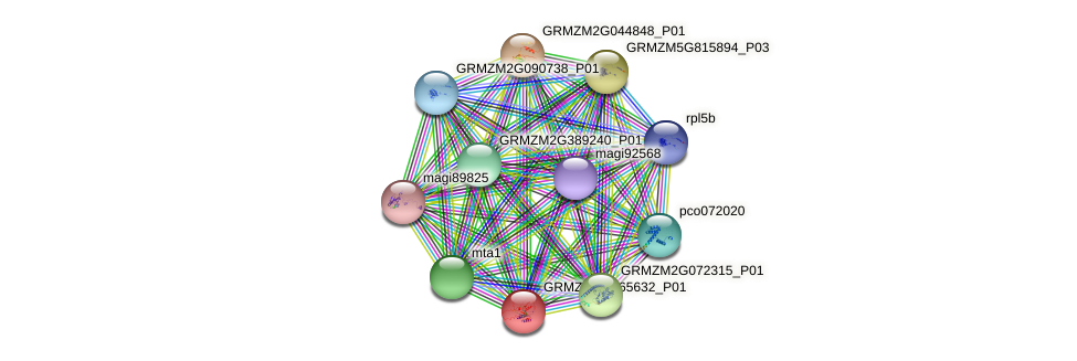 GRMZM2G065632_P01 protein (Zea mays) - STRING interaction network