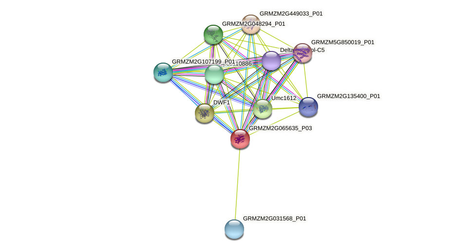 brs1 protein (Zea mays) - STRING interaction network