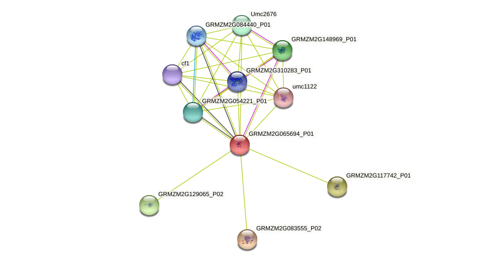 GRMZM2G065694_P01 protein (Zea mays) - STRING interaction network