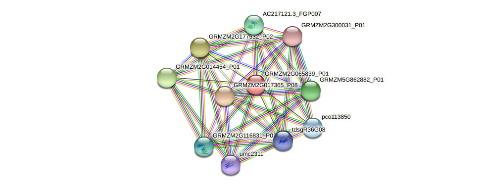 GRMZM2G065839_P01 protein (Zea mays) - STRING interaction network