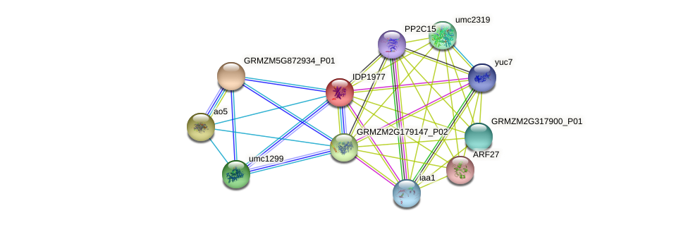 IDP1977 protein (Zea mays) - STRING interaction network