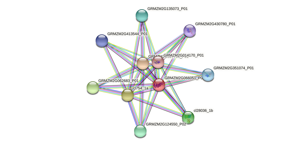 GRMZM2G066051_P01 protein (Zea mays) - STRING interaction network