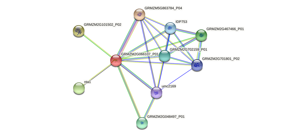GRMZM2G066107_P01 protein (Zea mays) - STRING interaction network