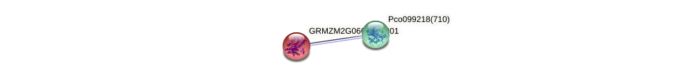 GRMZM2G066142_P01 protein (Zea mays) - STRING interaction network