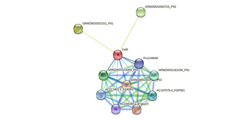 Cel6 protein (Zea mays) - STRING interaction network