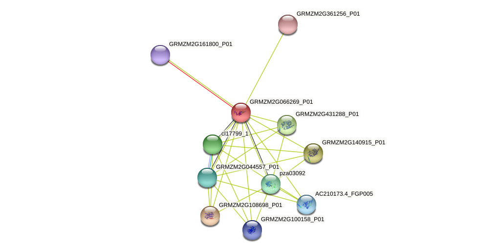 GRMZM2G066269_P01 protein (Zea mays) - STRING interaction network