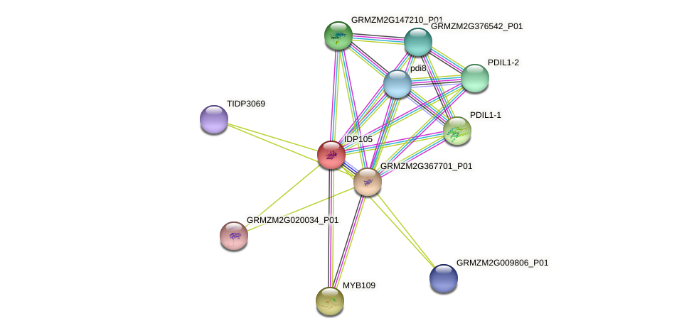 IDP105 protein (Zea mays) - STRING interaction network