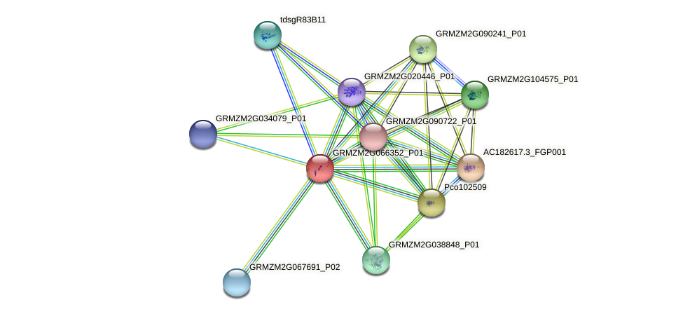 GRMZM2G066352_P01 protein (Zea mays) - STRING interaction network