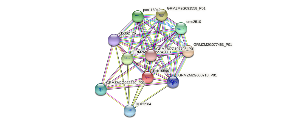 GRMZM2G066469_P01 protein (Zea mays) - STRING interaction network