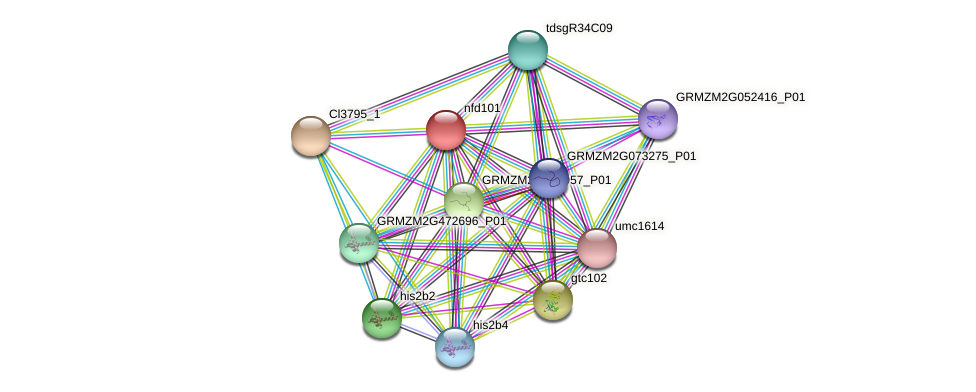nfd101 protein (Zea mays) - STRING interaction network
