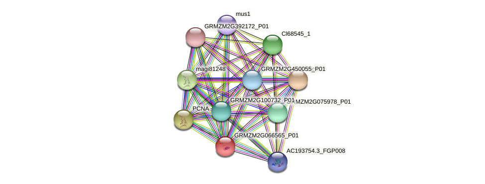 GRMZM2G066565_P01 protein (Zea mays) - STRING interaction network