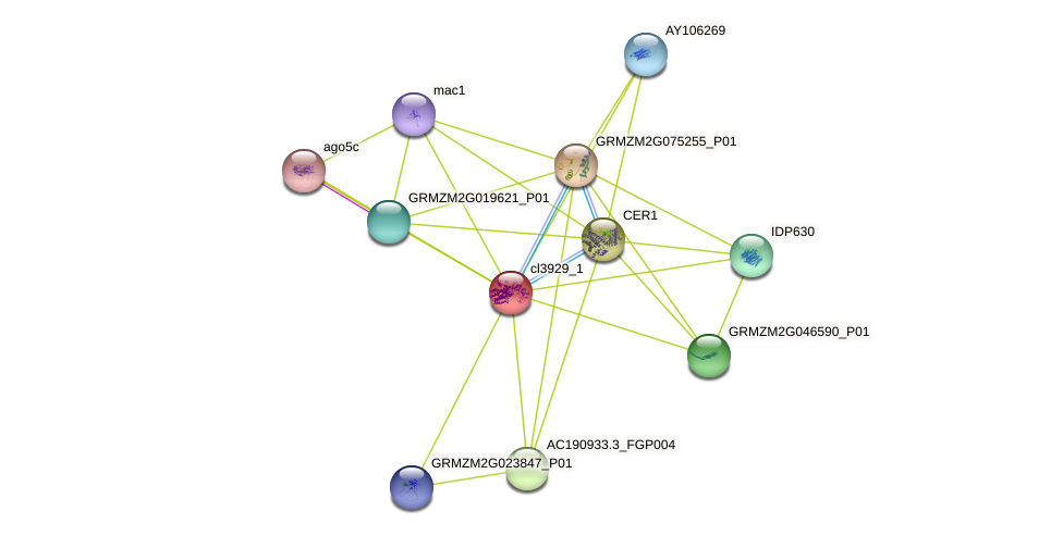 cl3929_1 protein (Zea mays) - STRING interaction network