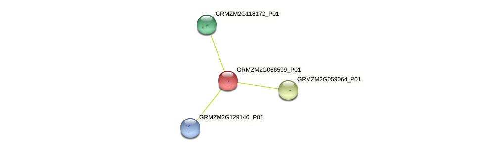 Zm.140673 protein (Zea mays) - STRING interaction network