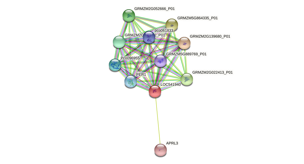 LOC541940 protein (Zea mays) - STRING interaction network