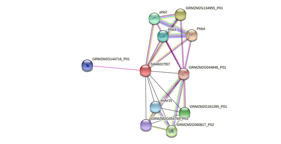 GRMZM2G066615_P01 protein (Zea mays) - STRING interaction network