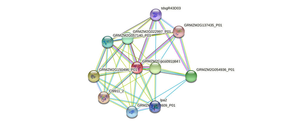 GRMZM2G066735_P01 protein (Zea mays) - STRING interaction network