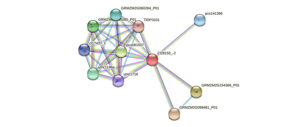 Zm.91240 protein (Zea mays) - STRING interaction network