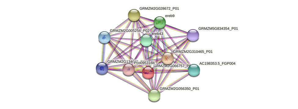 GRMZM2G066757_P01 protein (Zea mays) - STRING interaction network