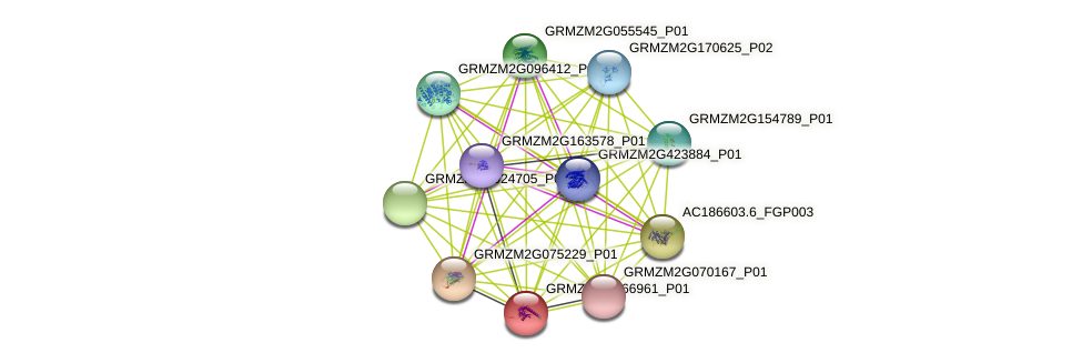 GRMZM2G066961_P01 protein (Zea mays) - STRING interaction network