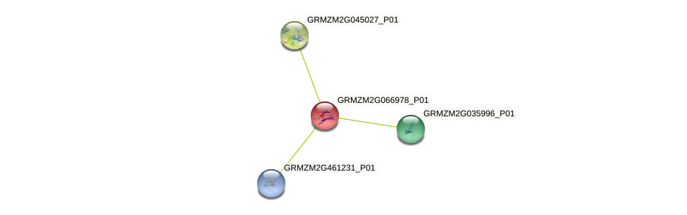 GRMZM2G066978_P01 protein (Zea mays) - STRING interaction network