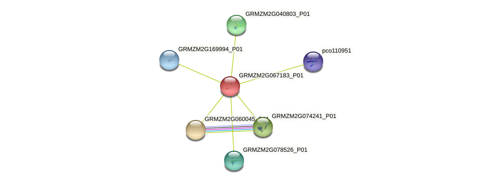GRMZM2G067183_P01 protein (Zea mays) - STRING interaction network