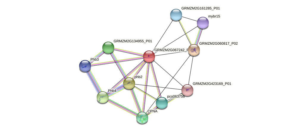 GRMZM2G067242_P01 protein (Zea mays) - STRING interaction network