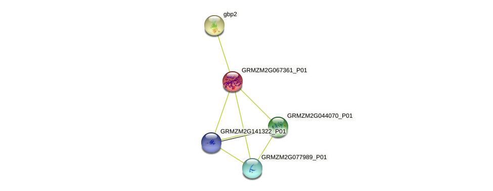 GRMZM2G067361_P01 protein (Zea mays) - STRING interaction network