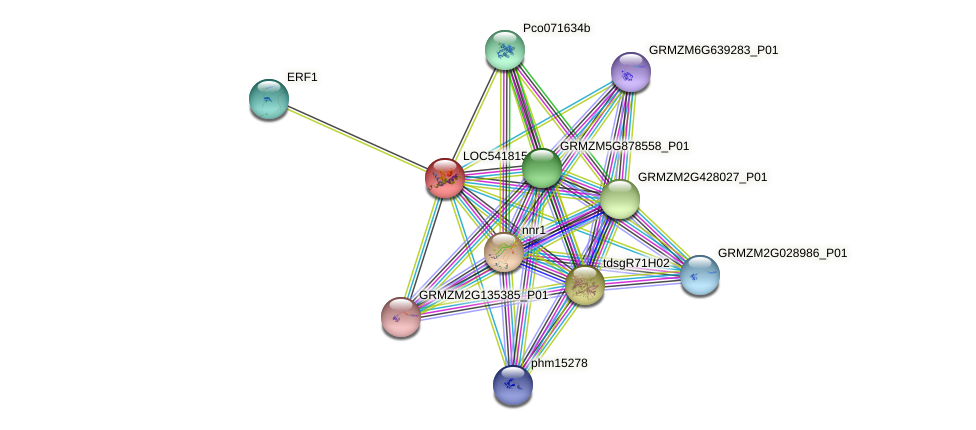 HB protein (Zea mays) - STRING interaction network