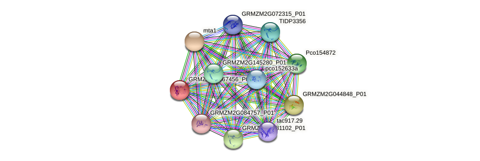 GRMZM2G067456_P01 protein (Zea mays) - STRING interaction network