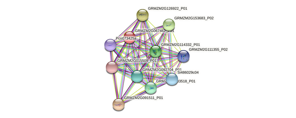 GRMZM2G067462_P01 protein (Zea mays) - STRING interaction network