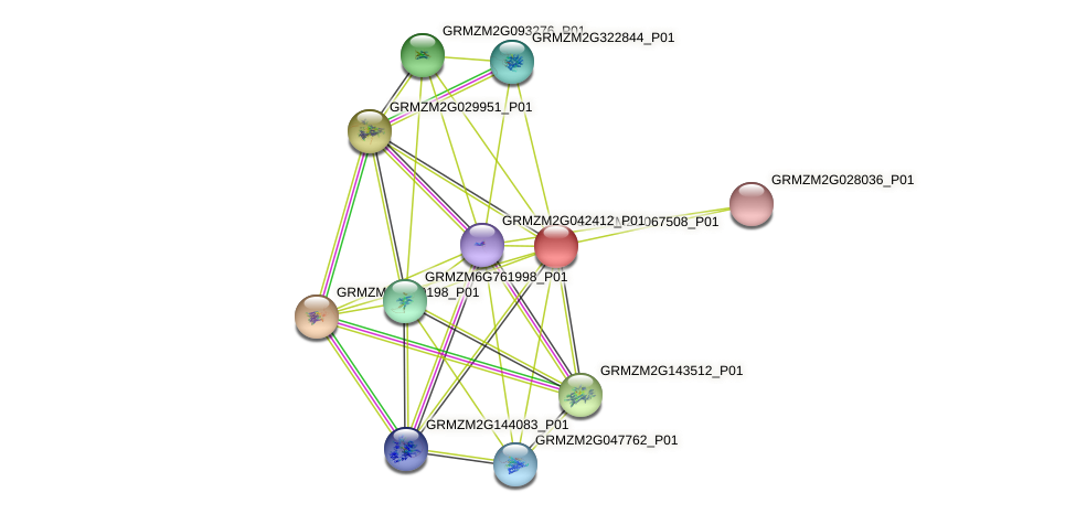 GRMZM2G067508_P01 protein (Zea mays) - STRING interaction network