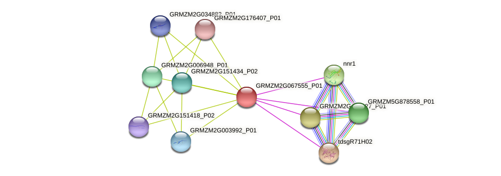 GRMZM2G067555_P01 protein (Zea mays) - STRING interaction network