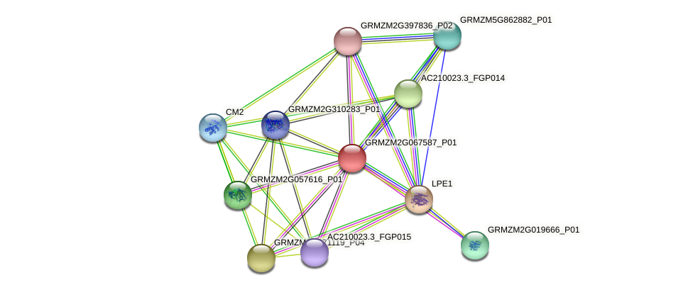 GRMZM2G067587_P01 protein (Zea mays) - STRING interaction network
