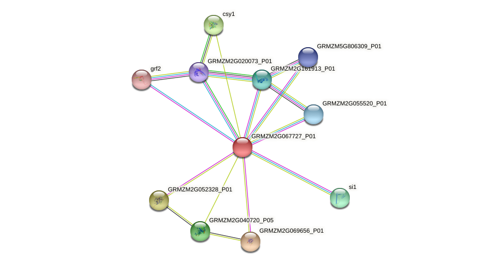 GRMZM2G067727_P01 protein (Zea mays) - STRING interaction network