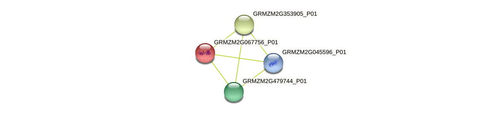 GRMZM2G067756_P01 protein (Zea mays) - STRING interaction network
