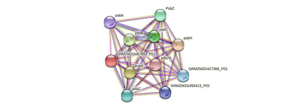 GRMZM2G067883_P01 protein (Zea mays) - STRING interaction network