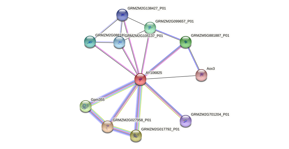 AY106825 protein (Zea mays) - STRING interaction network