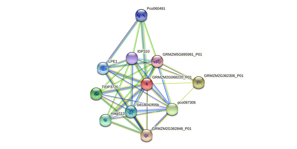 GRMZM2G068220_P01 protein (Zea mays) - STRING interaction network