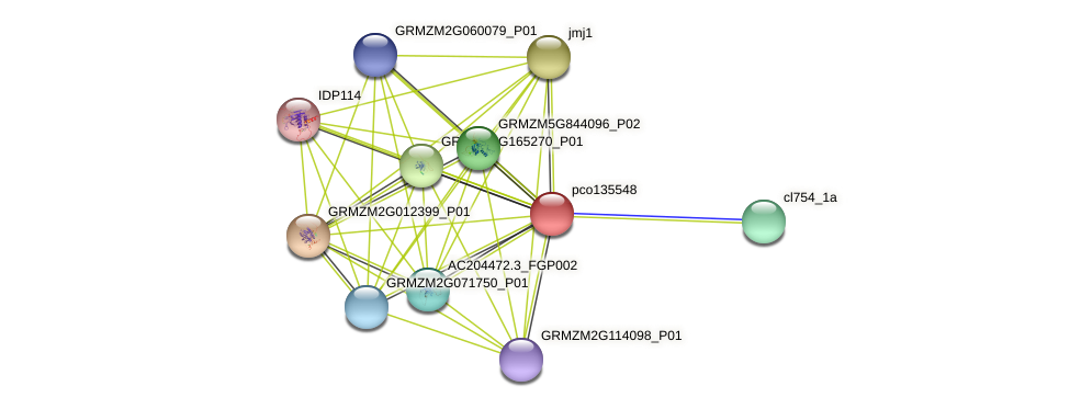 pco135548 protein (Zea mays) - STRING interaction network